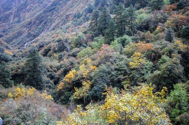 Trekking Annapurna ABC - Bamboo to Deurali (3)