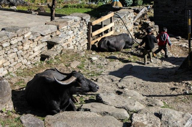 Trekking Annapurna ABC - Chomrong to Bamboo (6)