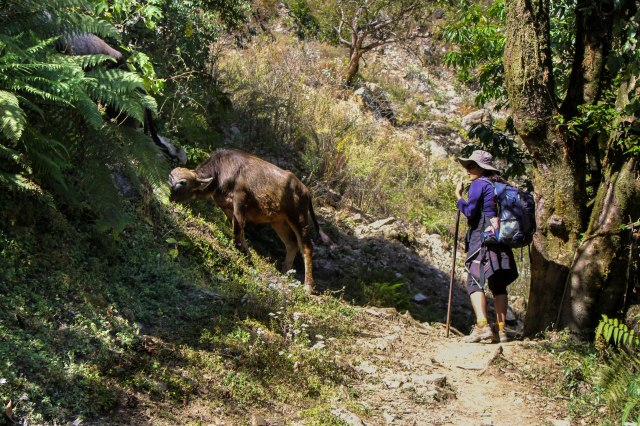 Trekking Annapurna ABC - Chuile to Chomrong (10)