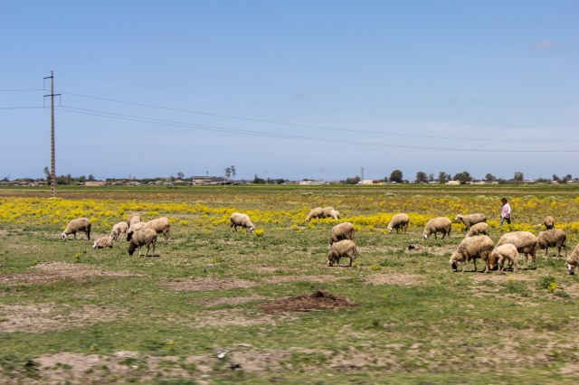 Drive from Chefchaouen to Casablanca