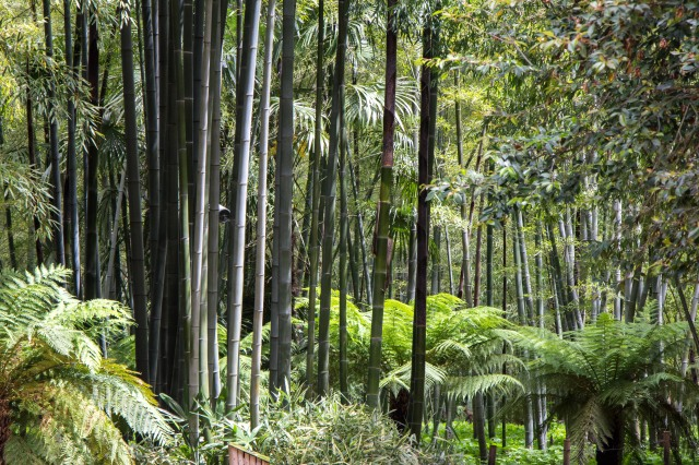 Bambouseraie de Prafrance