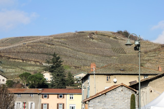 Vineyards above Ampuis, Rhone Valley