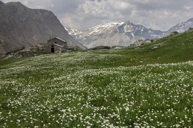 Alps_Mary Pass-1-14