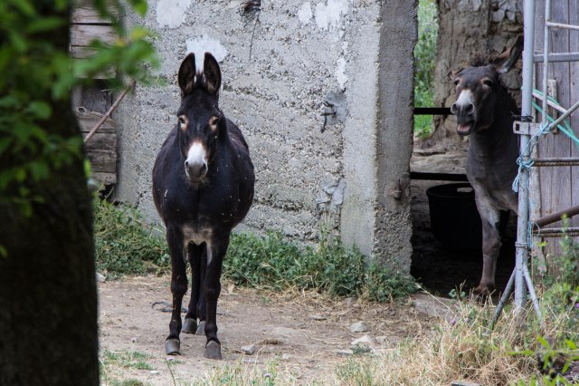 St Etienne de l'Olm - village donkey
