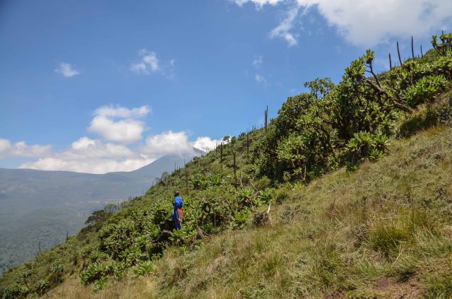 Above the tree line, courtesy Hali Chamney