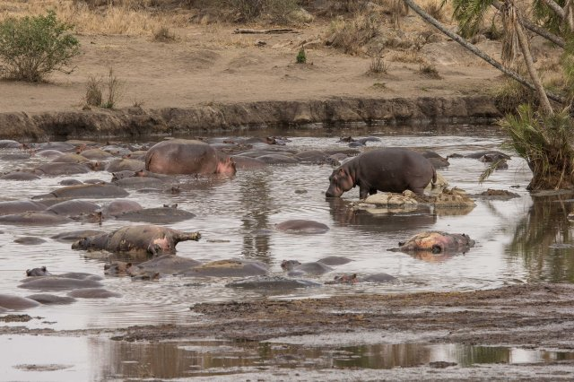 Creepy hippo pool