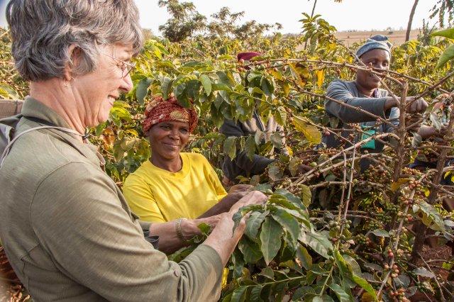 Ngorongoro Farm House - coffee plantation tour with Paulo