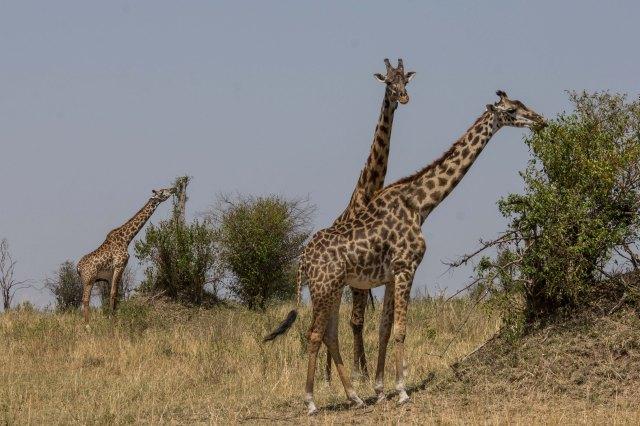 Serengeti North (30)