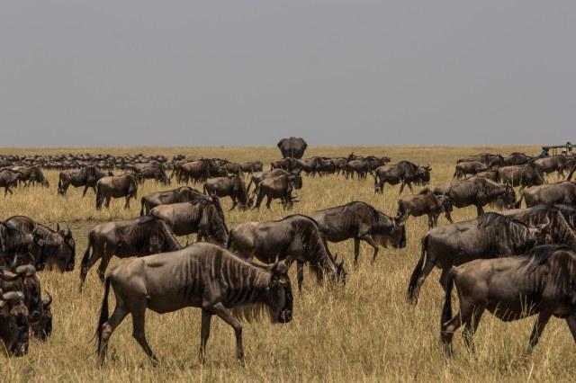 Serengeti North (34)
