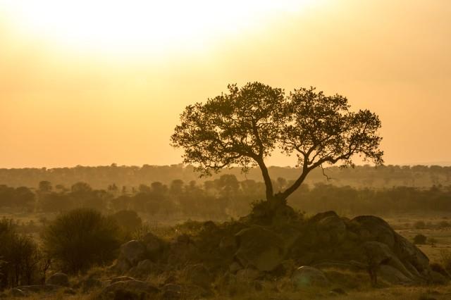 Serengeti North (69)