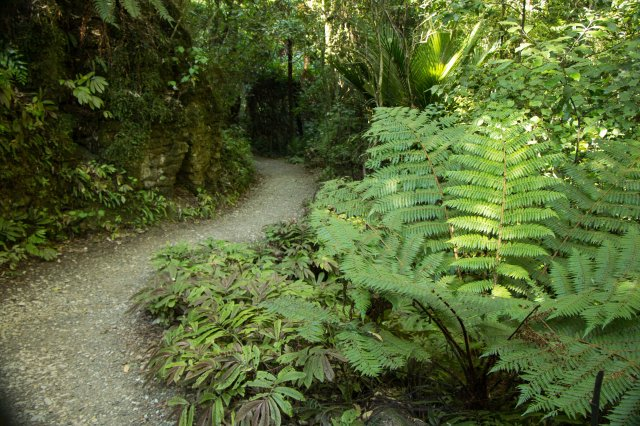 Waitomo Scenic Reserve