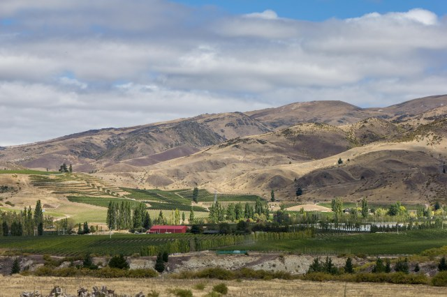 Otago Wine Region