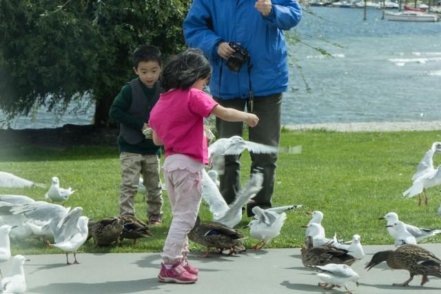 Feeding the Birds by the Lake in Wanaka