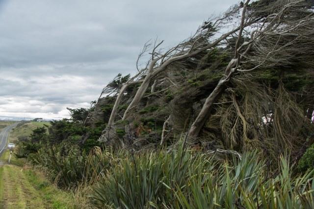 Route 99 to Te Anau