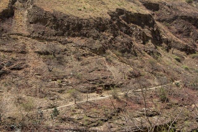 Mule Train Climbing the Trail