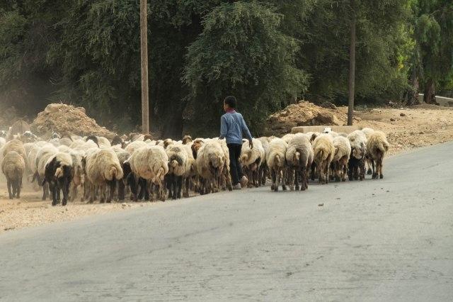 Drive to Madaba