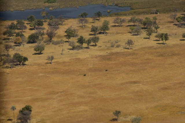 Okavango Delta - Flight to Little Kwara Lodge