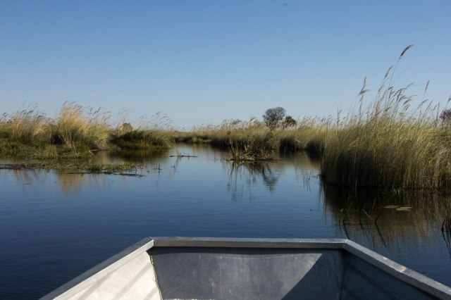 Little Kwara Day 3 Moremi Reserve-3