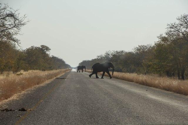 Arrival in Chobe-2