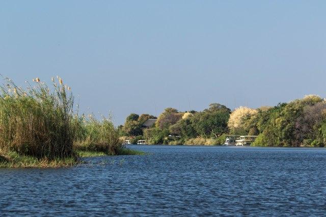 Chobe Boat Tour-18