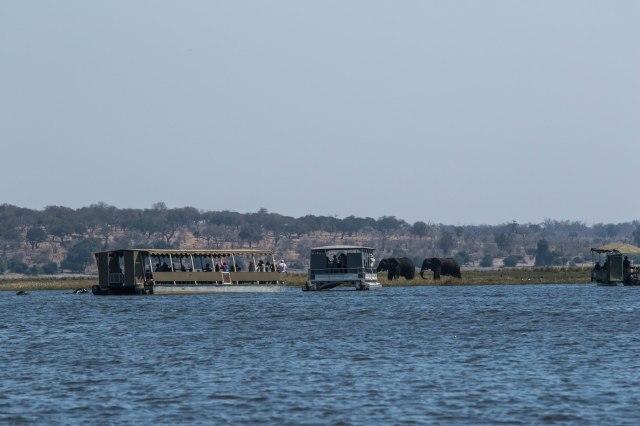 Chobe Boat Tour-2