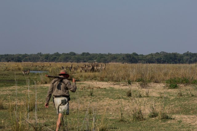 Mana Pools Canoe Trip - Day 2