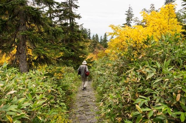 Midagahara - walk to caldera viewpoint