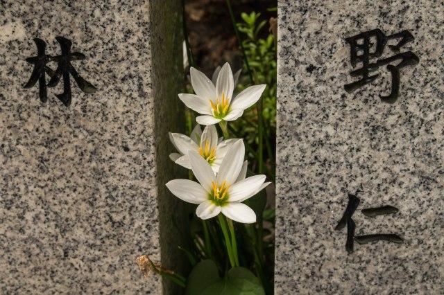 Sankoinari shrine