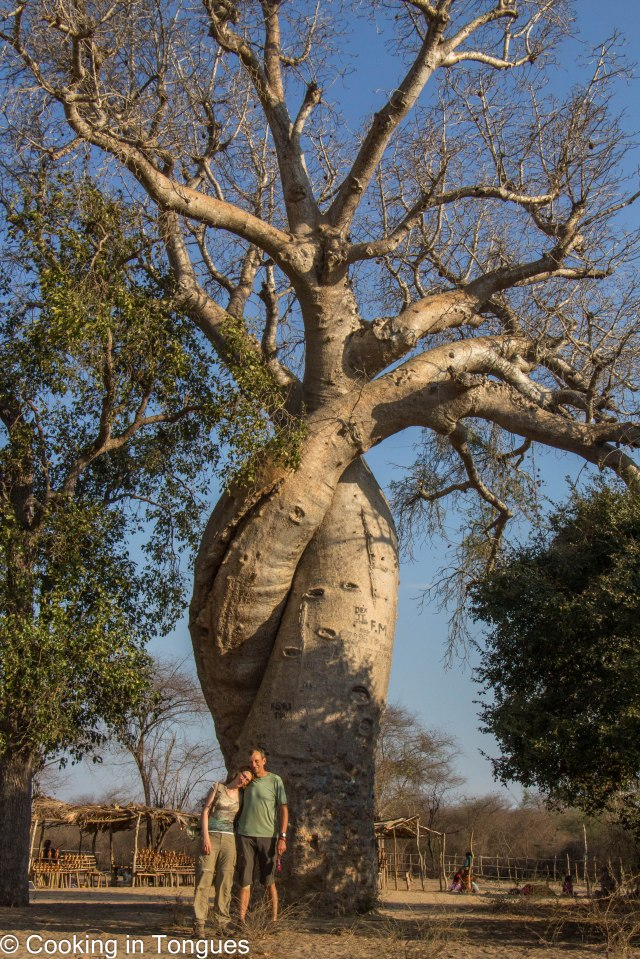 Baobabs in Love