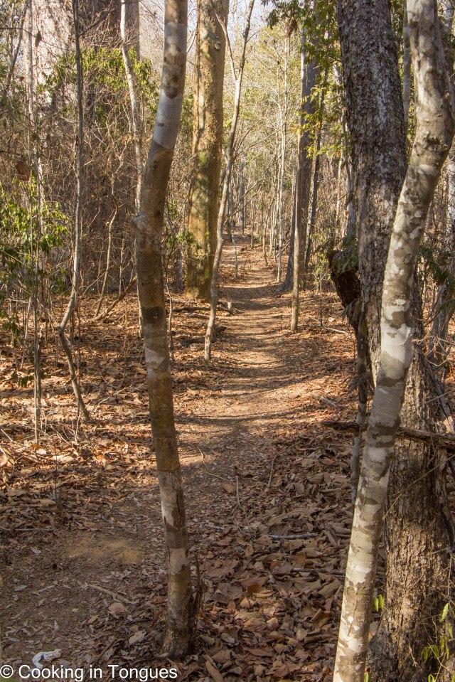 Kirindy Forest Morning Walk