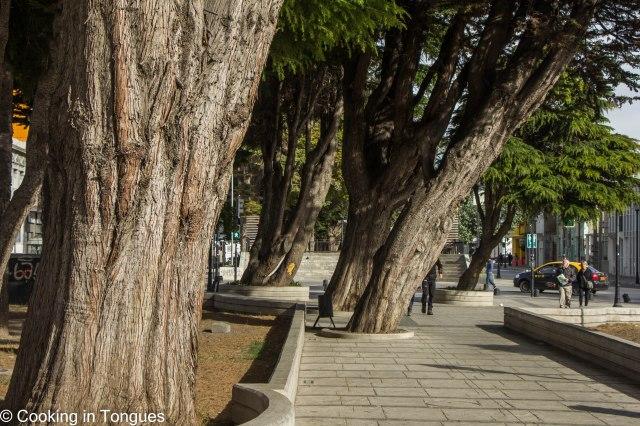 Punta Arenas (15 of 17)