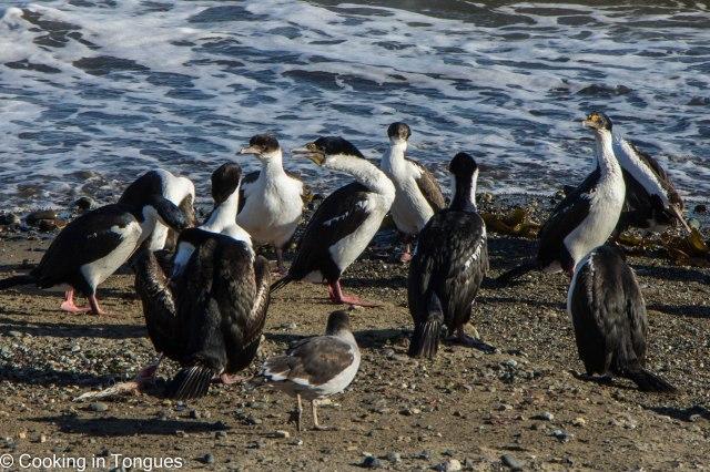 Punta Arenas (8 of 17)