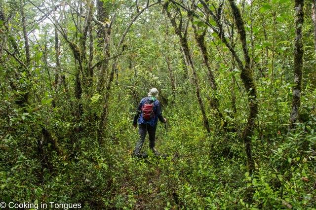 Los Alerces Trail