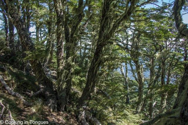 Cerro San Sebastián Hike