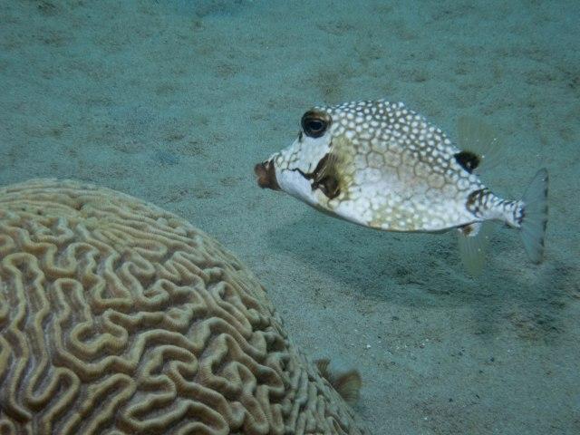 Bari Reef